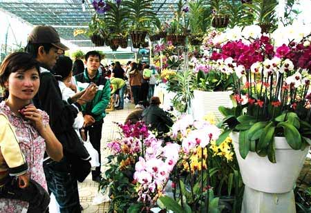 Các vườn hoa đã sẵn sàng mở cửa đón khách mua hoa Tết.