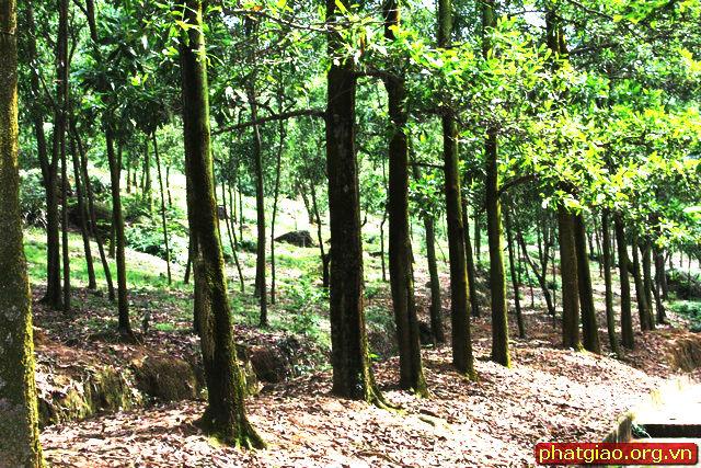Phong cảnh yên tĩnh với hàng cây hai bên đường lên chùa