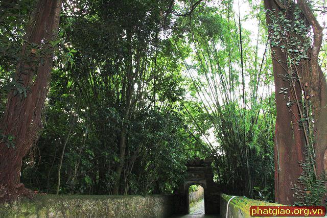 Hàng cây tre xanh cao trước cổng chào