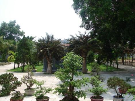 Cây cảnh tại sân chùa