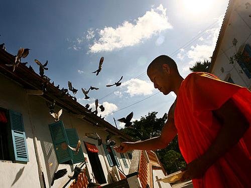 Ngôi chùa là nơi trú ngụ của nhiều loài dơi, quạ...