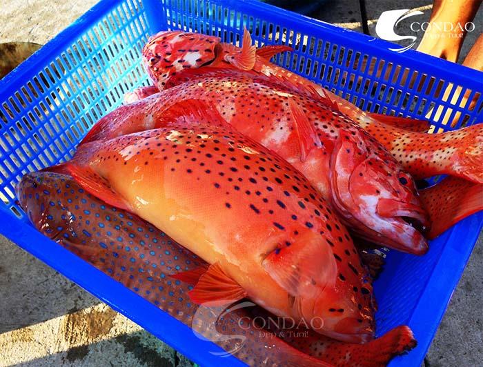 Cá mú đỏ, đặc sản ngon nhất ở Côn Đảo.
