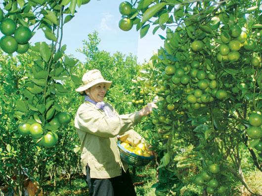 Trái cây Đắk Glong