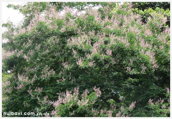 Hoa rừng nguyên sinh bằng tạ