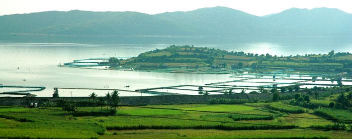 Đó là bức tranh toàn cảnh đầm, với mặt hồ rộng, từng làn sóng gợn lăn tăn theo gió, những ruộng mía xanh ngắt trên những dải đồi thấp thoai thoải.