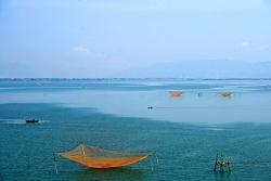 Đầm Thị Nại nổi tiếng là nhiều cá và cá ngon, nhất là cá Nục