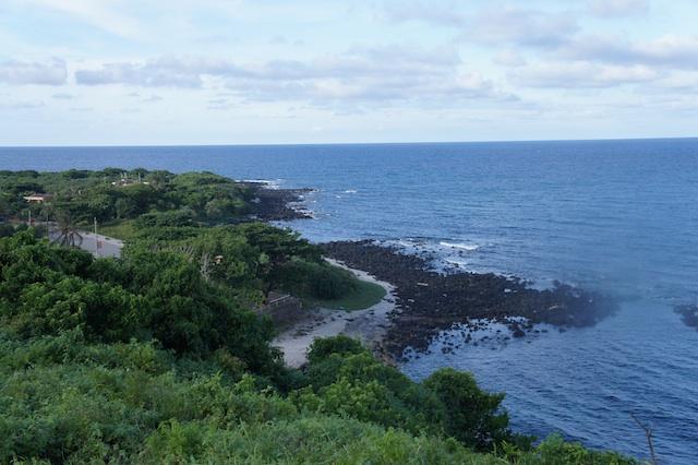 Thực vật trên đảo khá phong phú