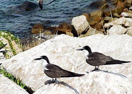 Đến với đảo yến, du khách không chỉ được khám phá về một loài chim đem lại nguồn lợi quý giá mà còn được chứng kiến nhiều di tích lịch sử văn hóa