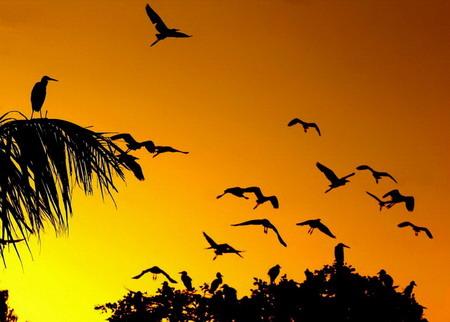Chim công -loài chim gắn liền với tên địa danh Đền Cuồng