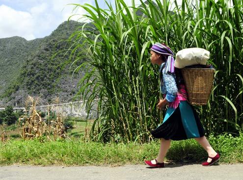 Thiếu nữ Mông trắng sải bước trên con đường Hạnh Phúc qua Mã Pì Lèng. Con đường được dựng xây bằng máu và mồ hôi của hàng chục nghìn nhân công những năm kháng chiến.