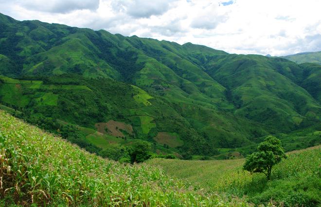 Bên cạnh đó là khung cảnh thanh bình của những cánh đồng ngô lá xanh rì. Lúa cũng ngả dần sang màu vàng óng.