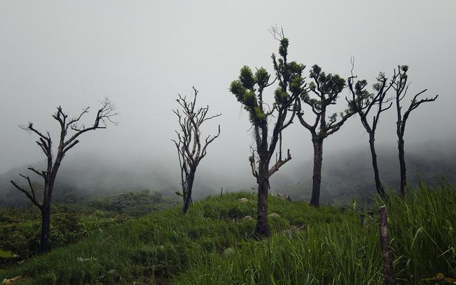 Những cái cây trơ trọi lá vẫn đứng đó giữa làn sương trắng xóa.