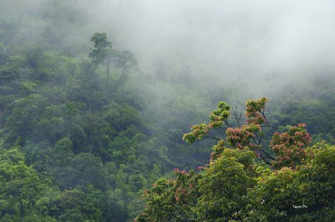 Dù chỉ mới một giờ rưỡi trưa, nhưng sương mù đã giăng ngang trên những tán cây.