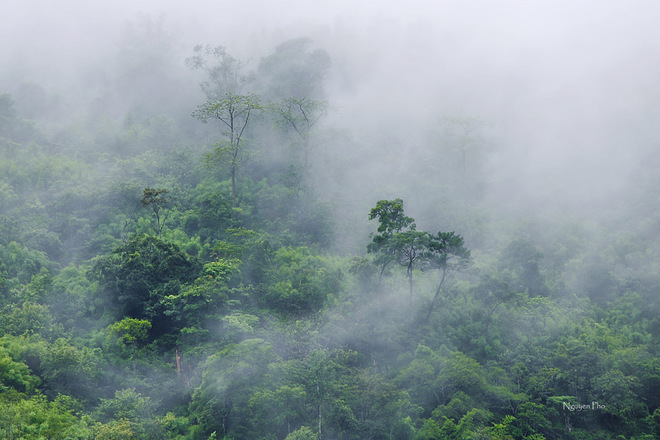 Màu trắng dày đặc của sương mù bao phủ khung cảnh dù rằng mùa hè là thời điểm ít sương mù nhất.