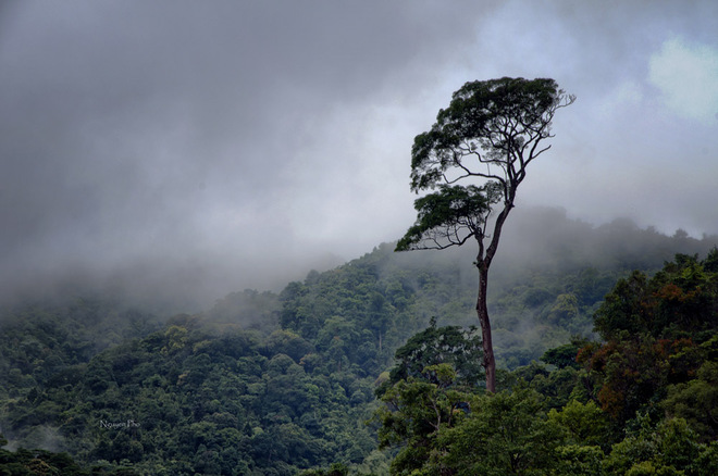 Mặc cho sương gió bão táp, cây vẫn vươn lên đứng một mình giữa sườn núi.