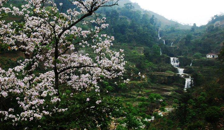 Điện Biên - mùa hoa ban nở