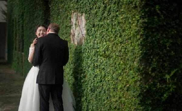 Bức tường phủ kín lá tuyệt đẹp ở Đồ Sơn, nơi chắp cánh cho nhiều ý tưởng nghệ thuật.