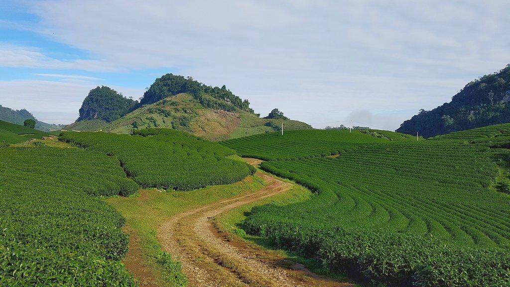 Đường mòn trong khu đồi chè, dẫn lên đỉnh đồi.