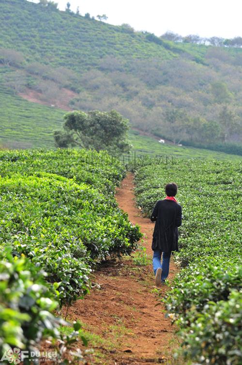 Có rất nhiều đồi chè khắp Mộc Châu, đồi chè này nằm gần nhất, đi qua khu chợ thị trấn Nông trường Mộc Châu là tới.