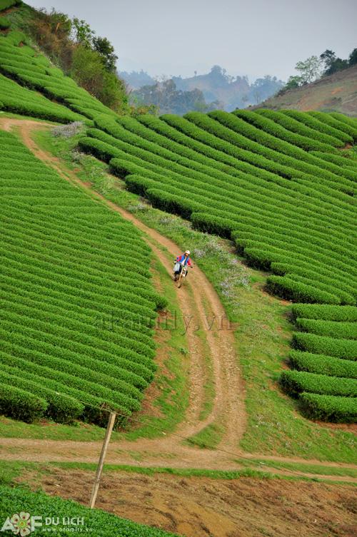 Bạn có thể chạy xuyên từ đồi này sang đồi khác với xe máy.