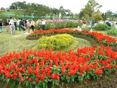 Khu vườn hoa với đủ sắc màu