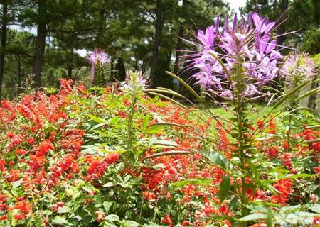 Những loài hoa trên Đồi Mộng Mơ