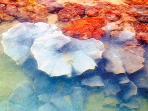 san hô, hải sâm đen và nhiều loài động thực vật đặc hữu của Vịnh Hạ Long đang sinh sôi rất tốt