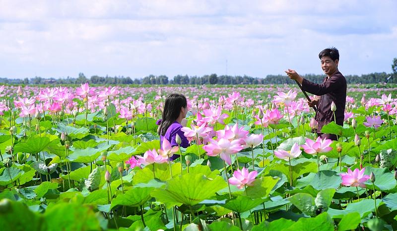 Sau khi tham quan làng hoa Sa Đéc bạn nên đến các điểm du lịch nổi tiếng khác của Đồng Tháp.