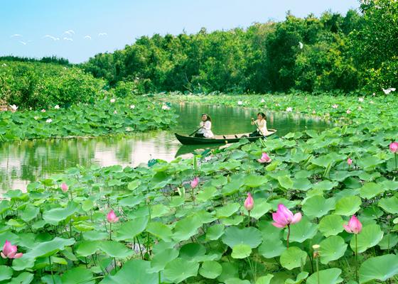 Đồng Tháp nổi tiếng với những cánh đồng Hoa Sen thơm ngát.