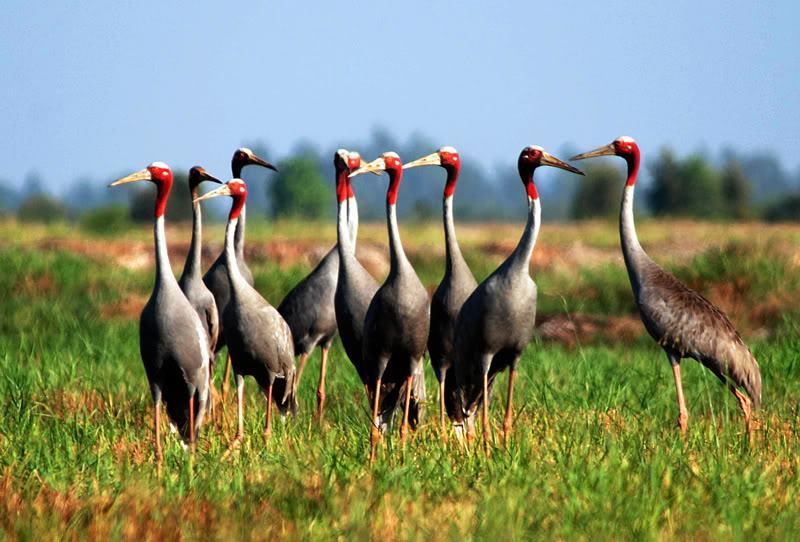 Điểm du lịch hấp dẫn: Vườn Quốc gia Tràm Chim