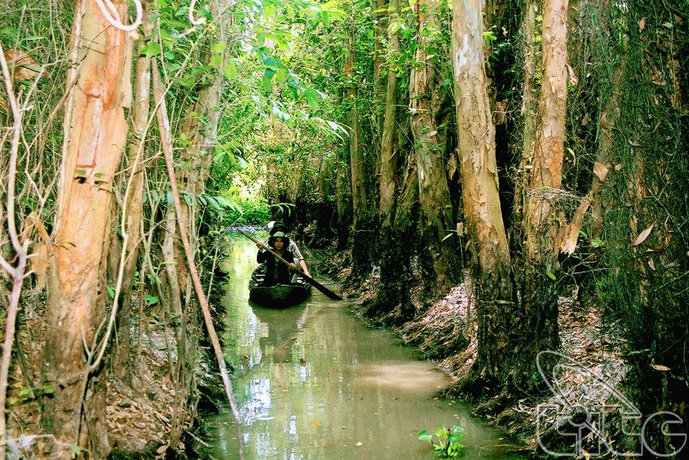 Điểm du lịch hấp dẫn: Khu sinh thái rừng tràm Xẻo Quýt
