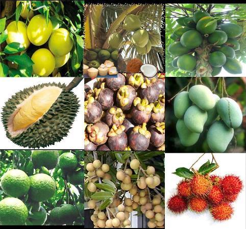 Một bức tranh với đa dạng sắc màu của hoa trái