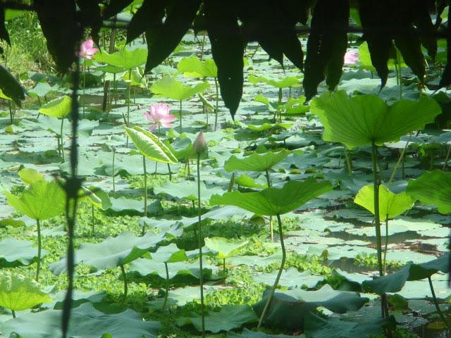 Miệt vườn Bình Thủy
