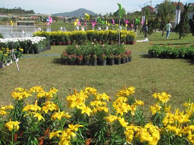 Không gian hoa bên Hồ Xuân Hương