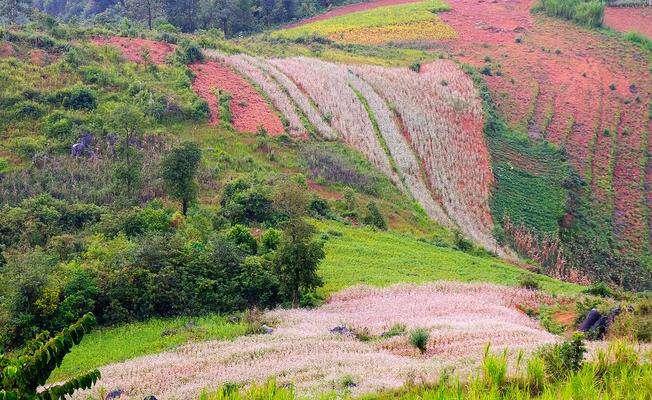 Vẻ đẹp của những cô gái Hà Giang trên cánh đồng Hoa Tam Giác Mạch.