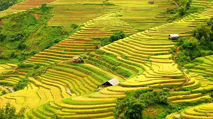 Hà Giang - mùa lúa chín vàng