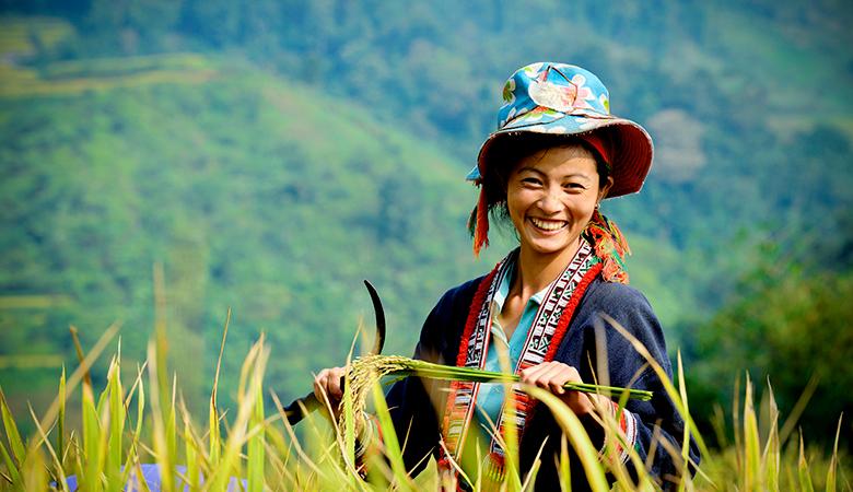 Nụ cười viên mãn của cô gái vùng cao khi lúa vào mùa thu hoạch