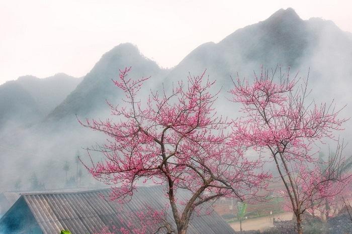 Mùa hoa đào Hà Giang.