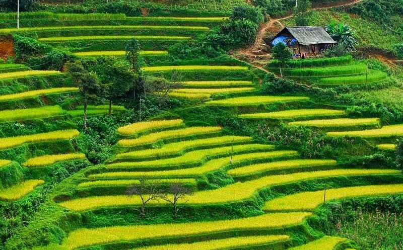 Ruộng bậc thang Hoàng Su Phì đẹp nhất Việt Nam và được công nhận là di sản Quốc Gia.