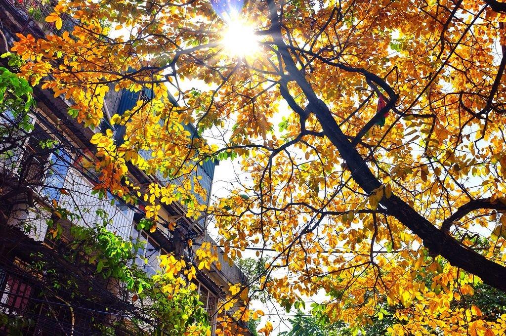 Mùa thu- mùa lá vàng Hà Nội