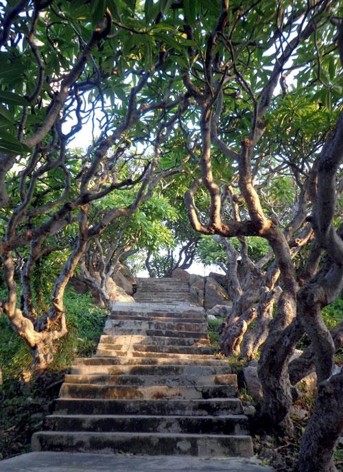 Hàng sứ hơn trăm tuổi tỏa bóng mát trên đường lên hải đăng