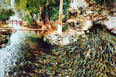Hang cá Cẩm Lương