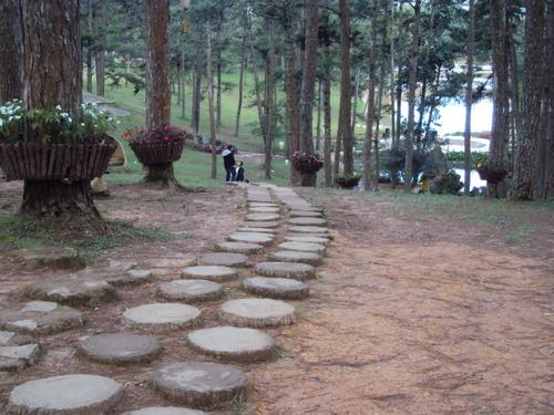 Con đường nhỏ vào rừng thông được tạo thành từ những hòn đá