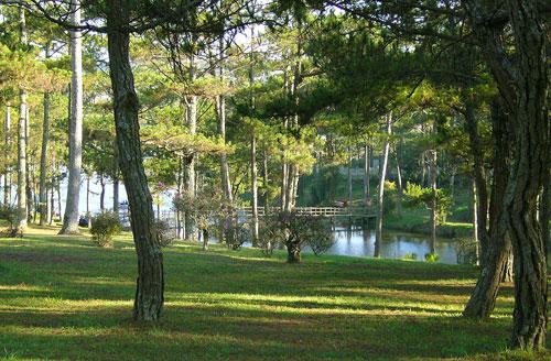 Rừng thông bên hồ với những thảm cỏ xanh ...