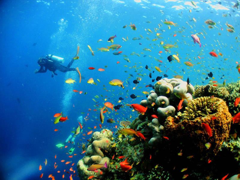Lặn biển ngắm san hô.