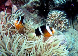 Đa dạng các loài sinh vật biển