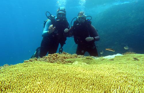 Bên dưới là những rặng san hô rộng lớn,  màu sắc