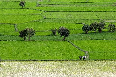 Một cánh đồng to lớn và một Núi Tô hùng vĩ trước mắt bạn, phong cảnh nên thơ hữu tình,