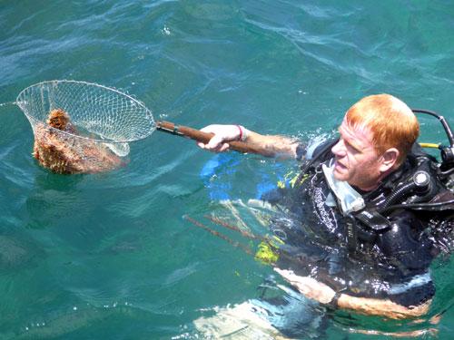 Du khách lặn biển bắt hải sản