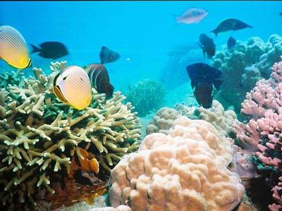 San hô tại khu bảo tồn